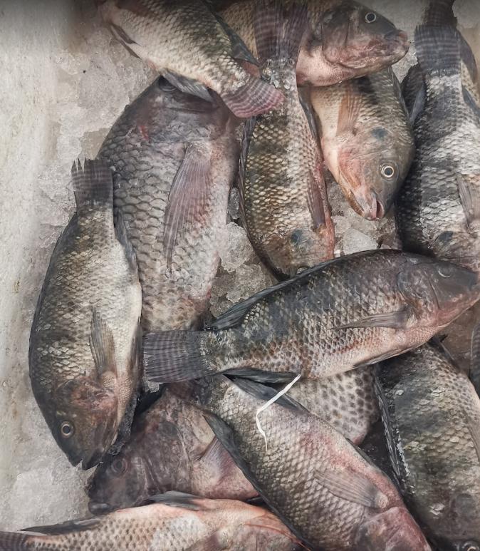Emad Fish